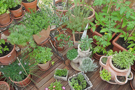 various herbs in pots in greenhouse