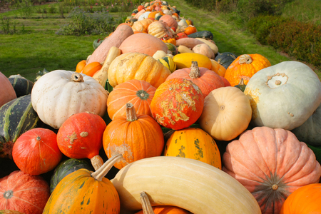 Various colorful pumpkins on a table outside in garden