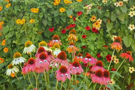 colorful and funny flowers with eyes in a garden