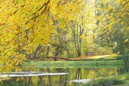 Bench and bridge on the water on a golden sunny autumn day in october