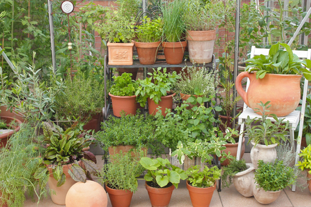 various herbs in pots with decorations and greenhouse in background