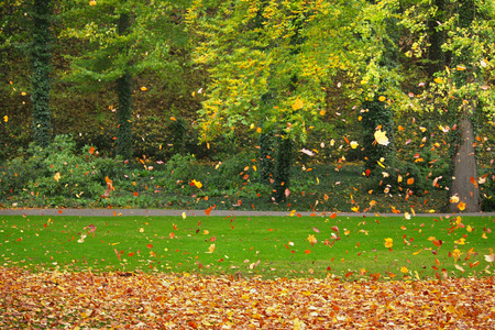 Falling leaves in a colorful park in autumn
