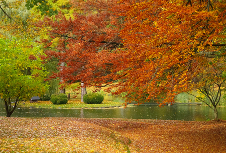Colorful trees in a park with a pond in autumn