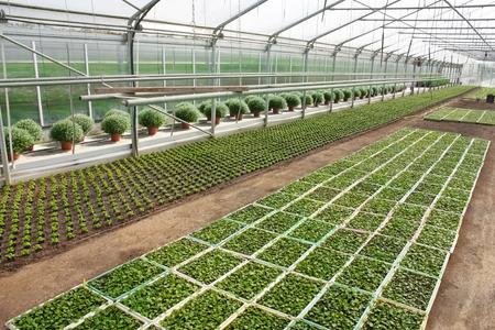 greenhouse with growing plants Standard-Bild