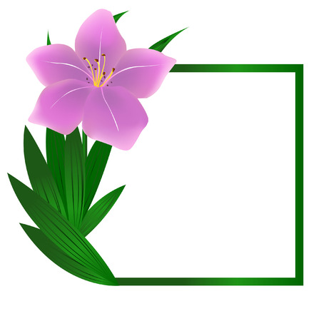 Beautiful square lily flower background Vector