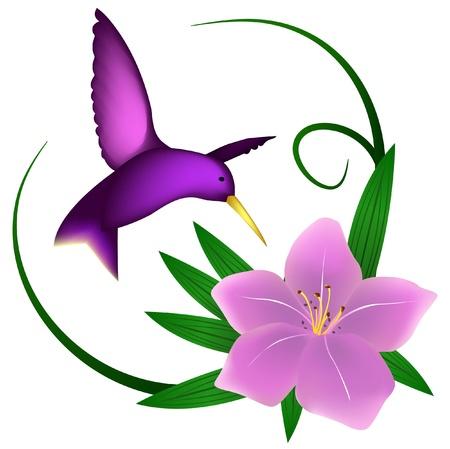 humming: Colibr� y lily, aislados en blanco Vectores