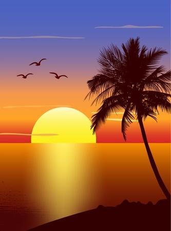 Coucher de soleil avec la silhouette de palmier
