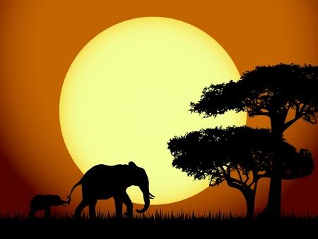 siluetas de elefantes: Elefantes en el atardecer