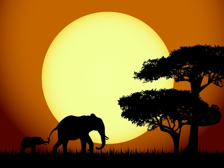baby elephant: Elephants at sunset Illustration