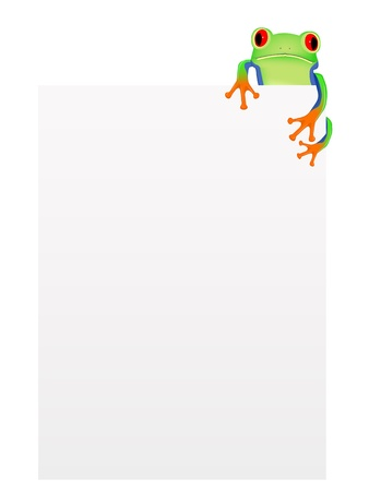 Red eyed tree frog with blank background Vector
