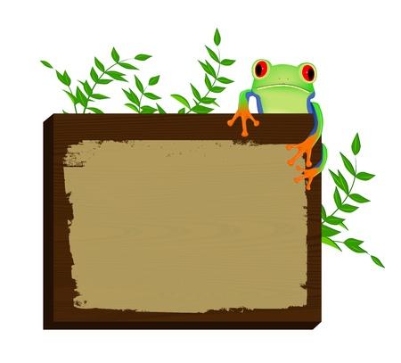 tree frogs: La rana arb�rea de ojos rojo sentada en la madera de fondo