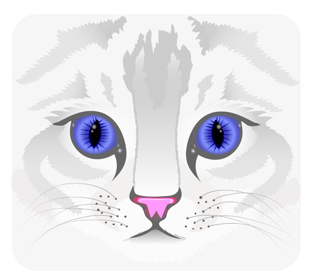Close up of cat face Stock Vector - 12897677