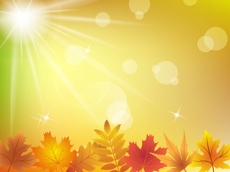 Autumn leaves in sunlight background Stock Vector - 15820589