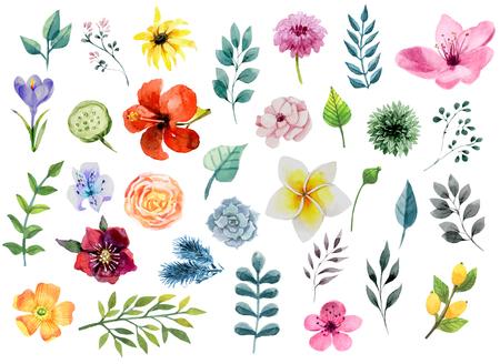 de colores: Conjunto de elementos florales de acuarela