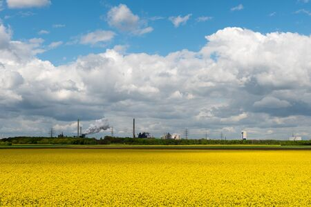 ruhr: Bee hives in a flowering rape field in front of a backdrop industry in the Ruhr Area. Stock Photo