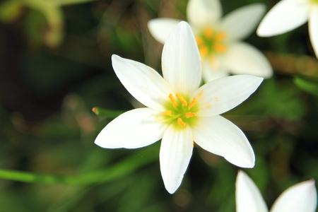 white flower green background Stock Photo
