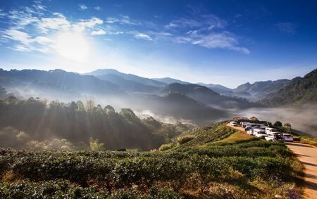 chiangmai: Landscape of Tea Field with fog in morning at Chiangmai Thailand.
