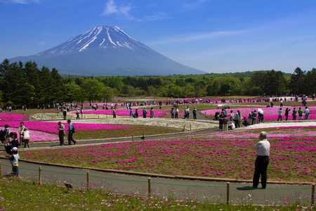 the silence of the world: Mt. Fuji and enjoy the cherry blossom at spring every year. Mt. Fuji is the highest mountain in Japan.
