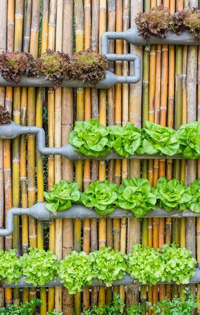 有機水耕野菜垂直庭園