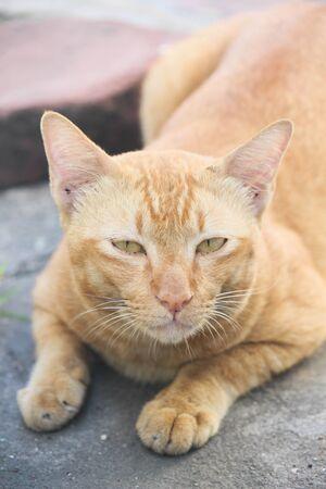 yellow: Yellow cat Stock Photo