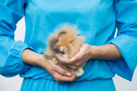 Young beautiful woman hugs mini rabbit with her arms in outdoor area Stock Photo