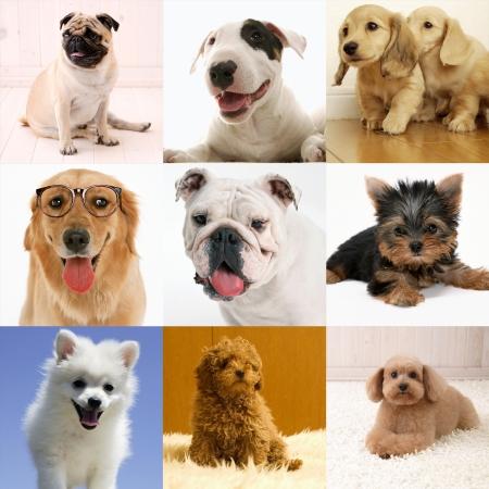 Purebred dog collection Stock fotó