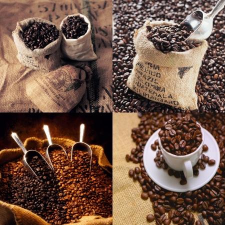 grano de cafe: recolecci�n de granos de caf� Foto de archivo