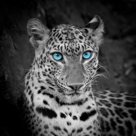 Tigre blanc Banque d'images - 22006878