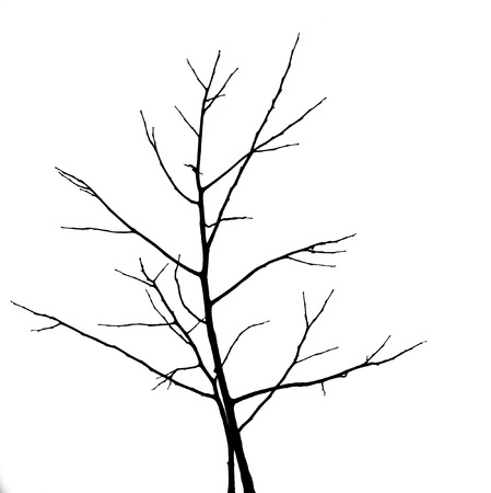 Dead Tree without Leaves photo