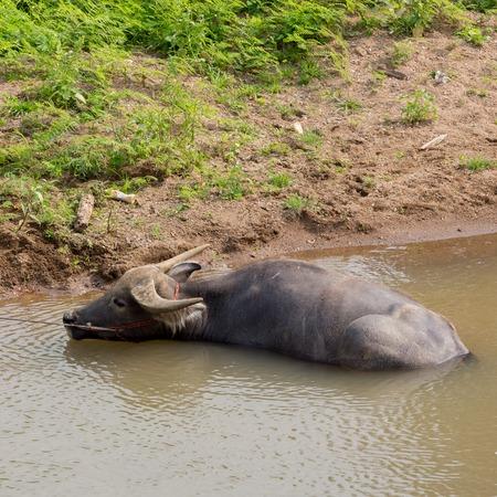 buffalo f on the river