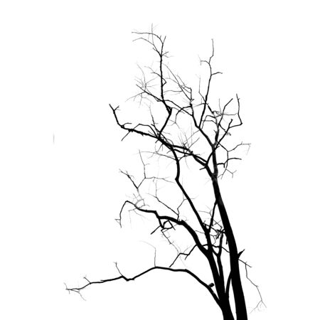 sketched shapes: Dead Tree without Leaves