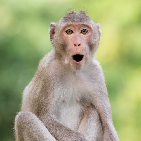 simian: monkey