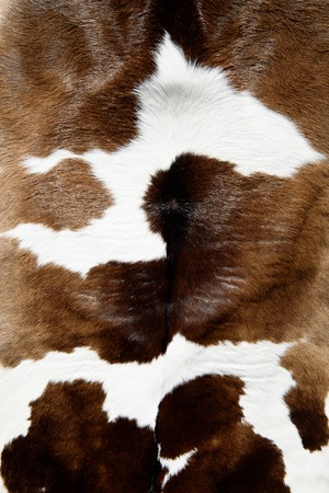 Cow skin texture