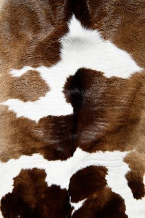cuero vaca: Vaca textura de la piel Foto de archivo