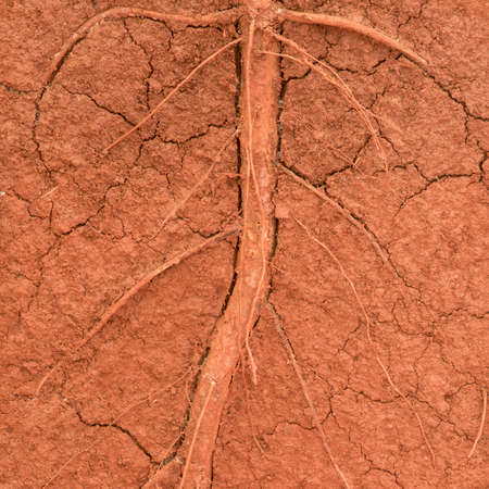 soil texture: The root of the tree in the ground