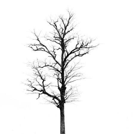 dode bladeren: Dode boom zonder bladeren