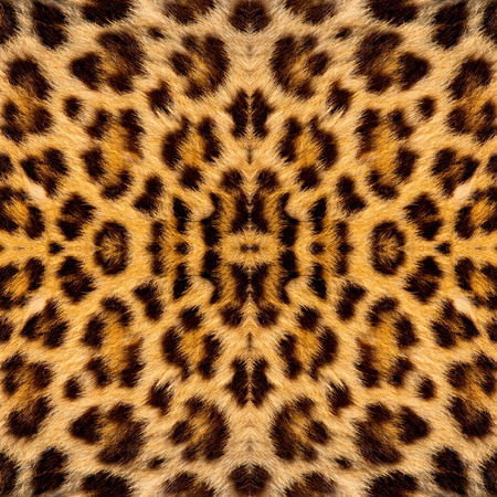 black jaguar: Real jaguar skin Stock Photo