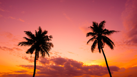 beach sunset: Two palm trees silhouette on sunset tropical beach