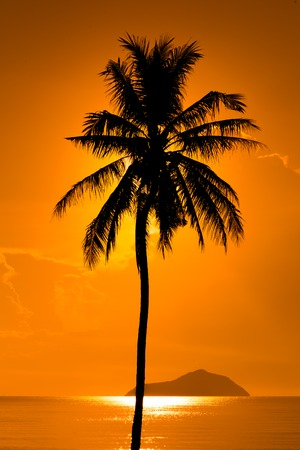 gloaming: Silhouette Coconut Palm Tree