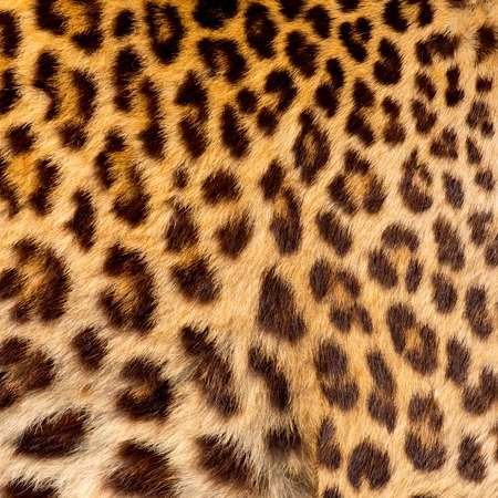 Real jaguar skin Standard-Bild