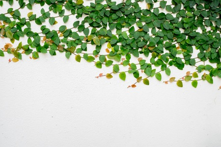 backgrounds, cement, green, ivy, nature, pattern, plant, textured, wall