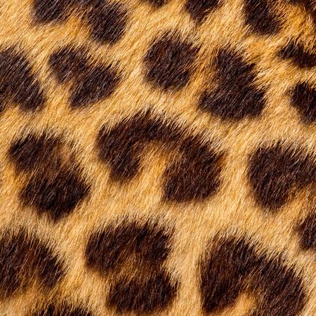 Real jaguar skin Stock Photo