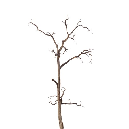 tree: Dead Tree without Leaves