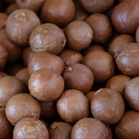 Macadamia nut background