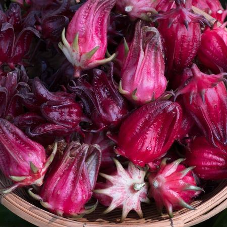 Many of Roselle fruits Hibiscus sabdariffa