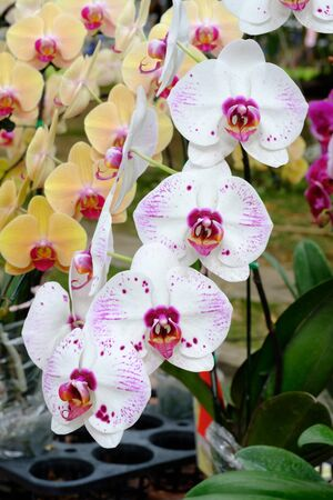 high section: beautiful orchid in the garden