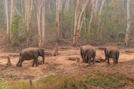 four elephant in the forest