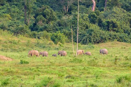 many elephant in the forest