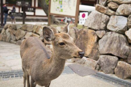 deer Imagens