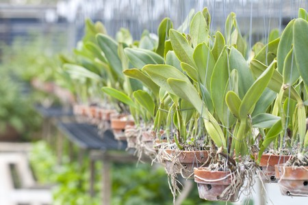 orchid house: orchid in a nursery - Orchid house Stock Photo